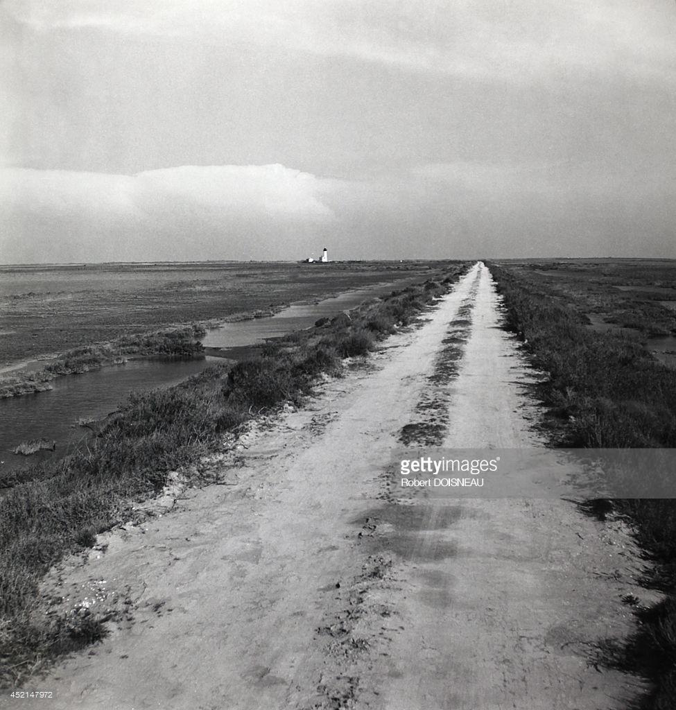 1947. Камарг (региональный природный парк). Пейзаж