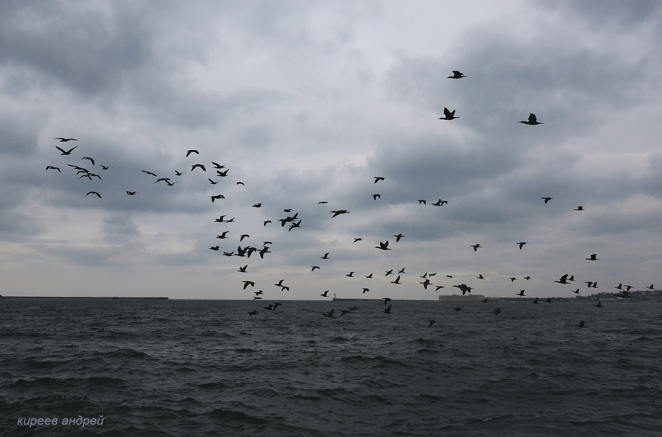 Зимний Севастополь. Птичий рай. -
