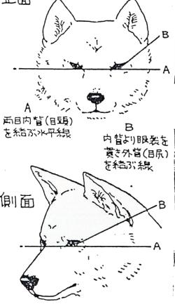 глаза 2.jpg
