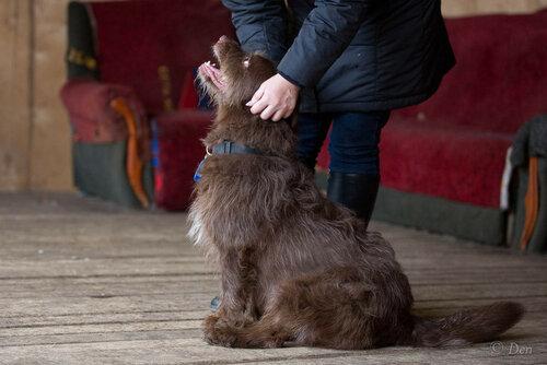 Бренди собака в добрые руки в москве фото