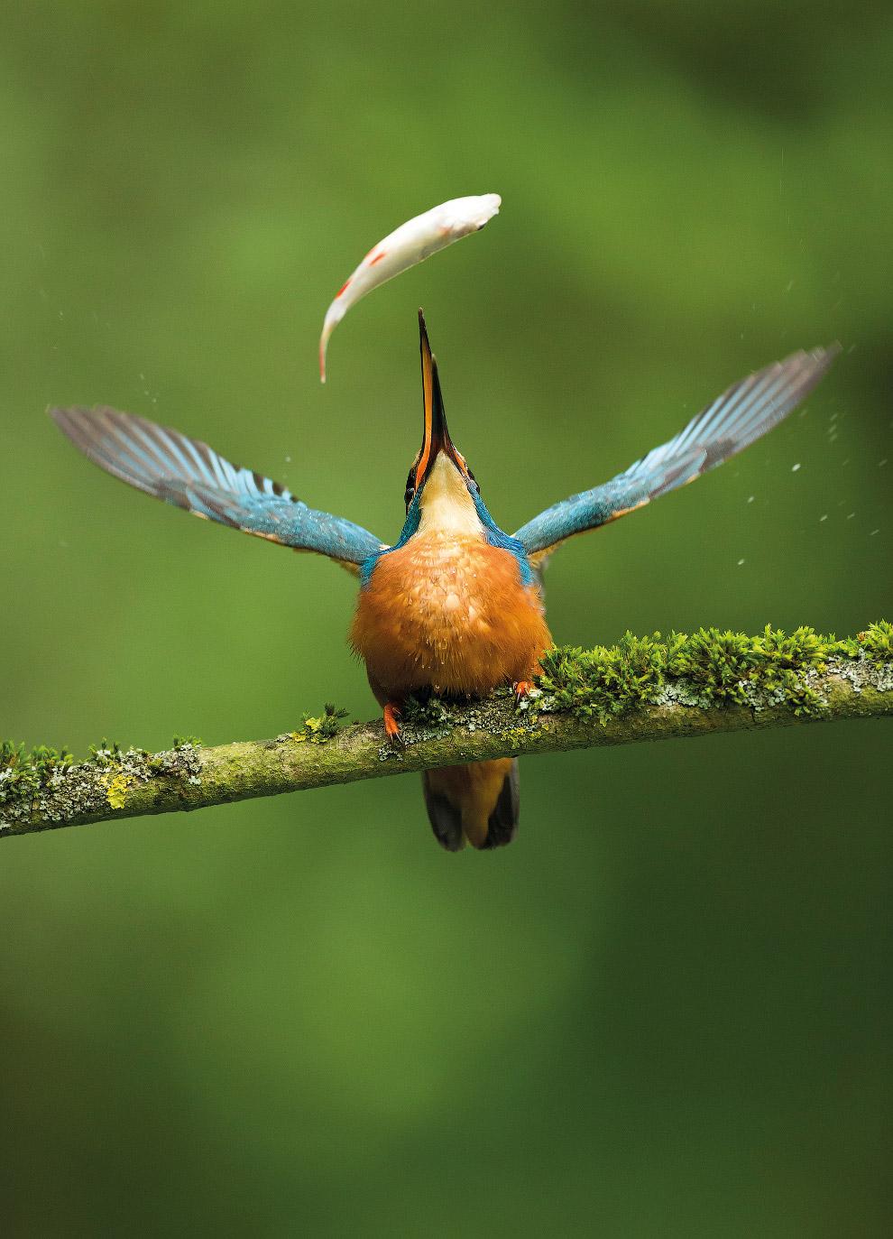 11. Кряква в стокгольмском парке. (Фото Daniel Stenberg | 2017 Bird Photographer of the Year