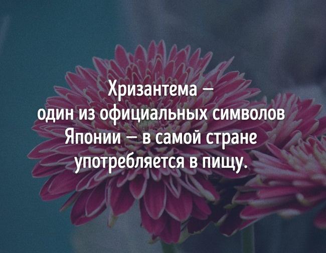 © pixabay      Факт