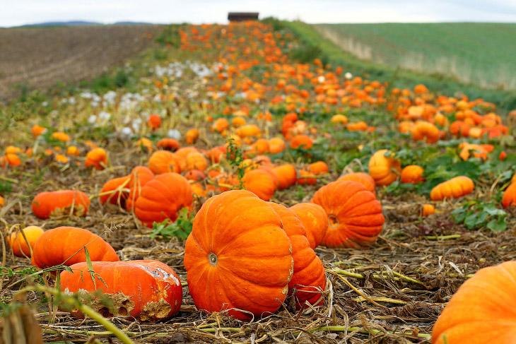 1. Каждый год, осенью в Калифорнии проводятся бега индеек. Они бегут за радиоуправляемой машиной с к