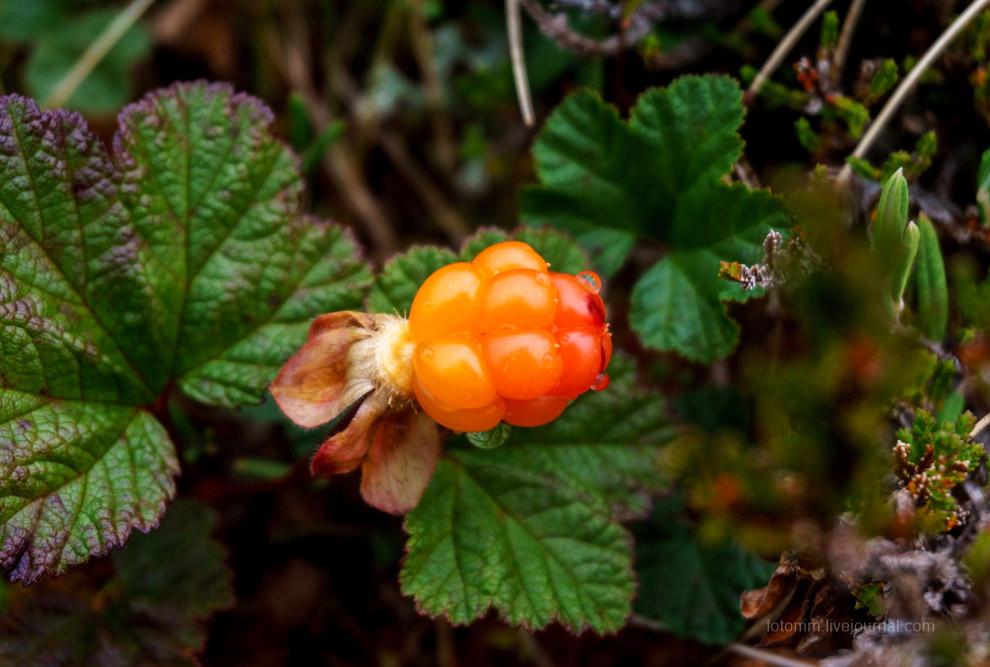 6. Грибы, в основном белые и подосиновики, растут просто ... как грибы. Искать их не надо. Просто ед