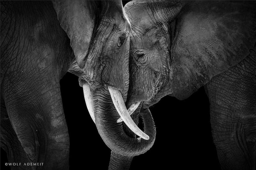 Люби как слон (6 фото)