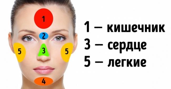 Если на лице появляются высыпания вот на работу каких органов стоит обратить вам внимание.  Л
