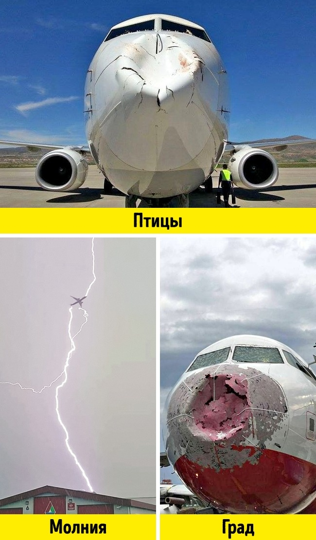 © flight_report / twitter  © Schnitzelnator / reddit  © YuraOsinin / pikabu