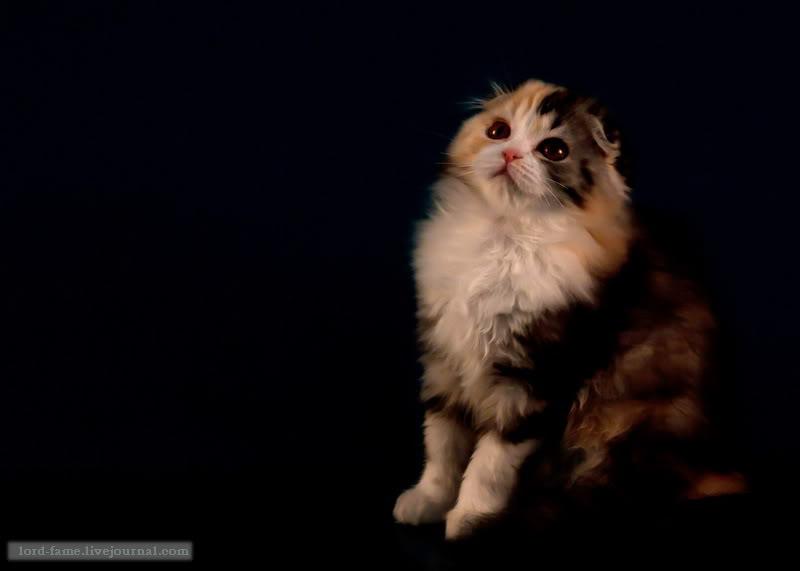 cats11.JPG