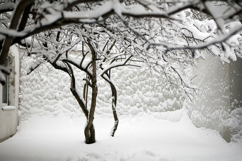 the Lilac bushes in the snow after a snowfall in Moscow against a gray wall