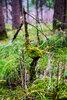 Безмятежность леса