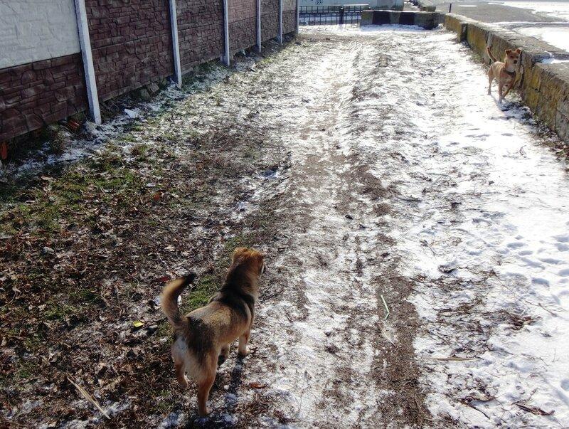 Собака в январе, год 2018 (24).JPG