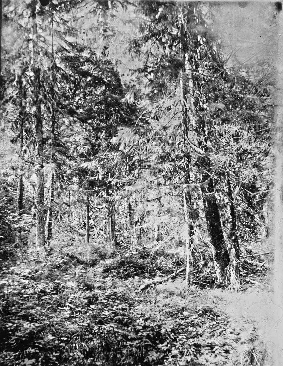 Окрестности Тобольска. Старое место жертвоприношений остяков