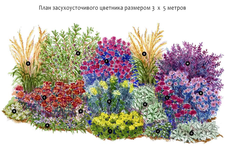 План — схема засухоустойчивого цветника