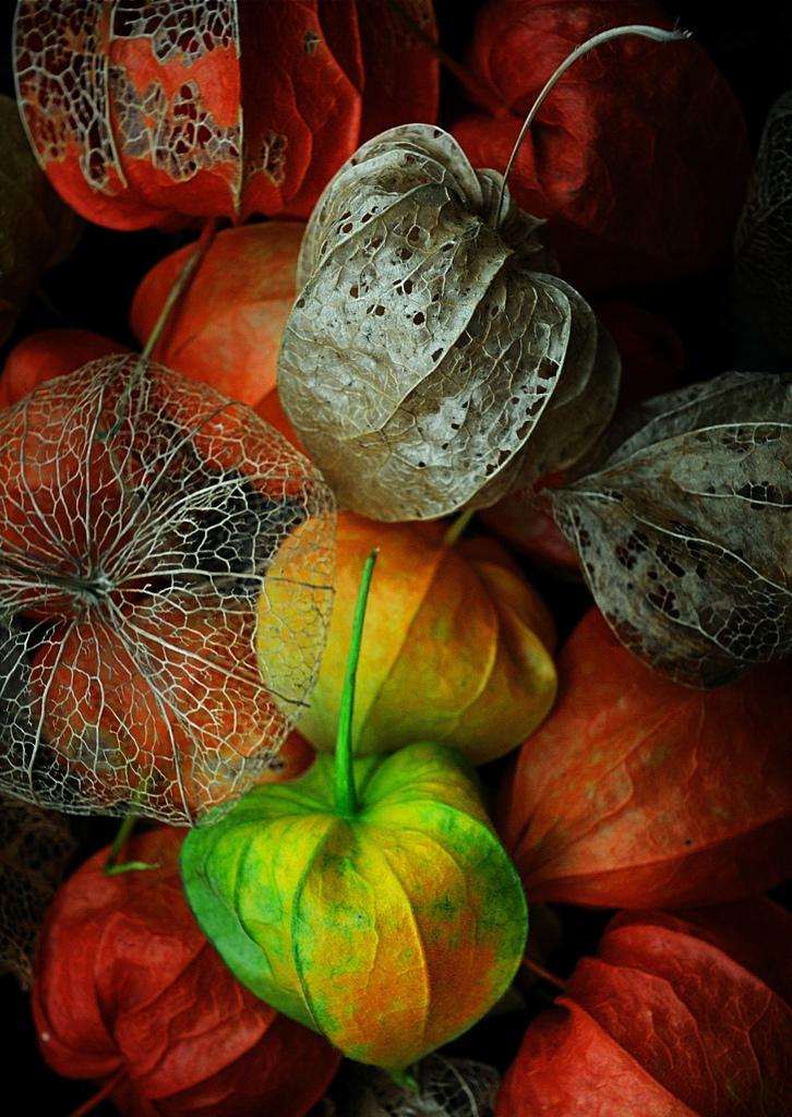 Autumn picks / фото Lotte Grønkjær