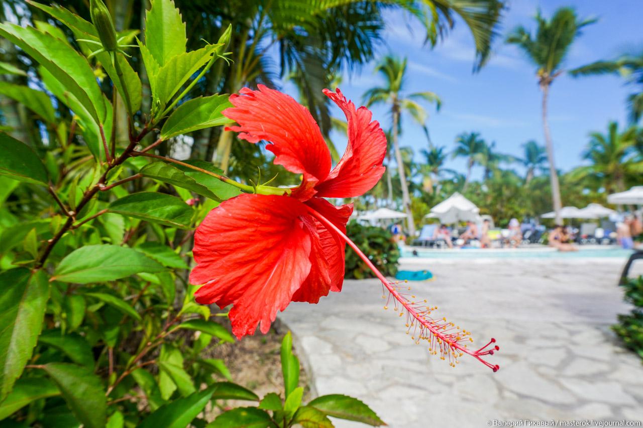 Флора Доминиканы не выходя из отеля
