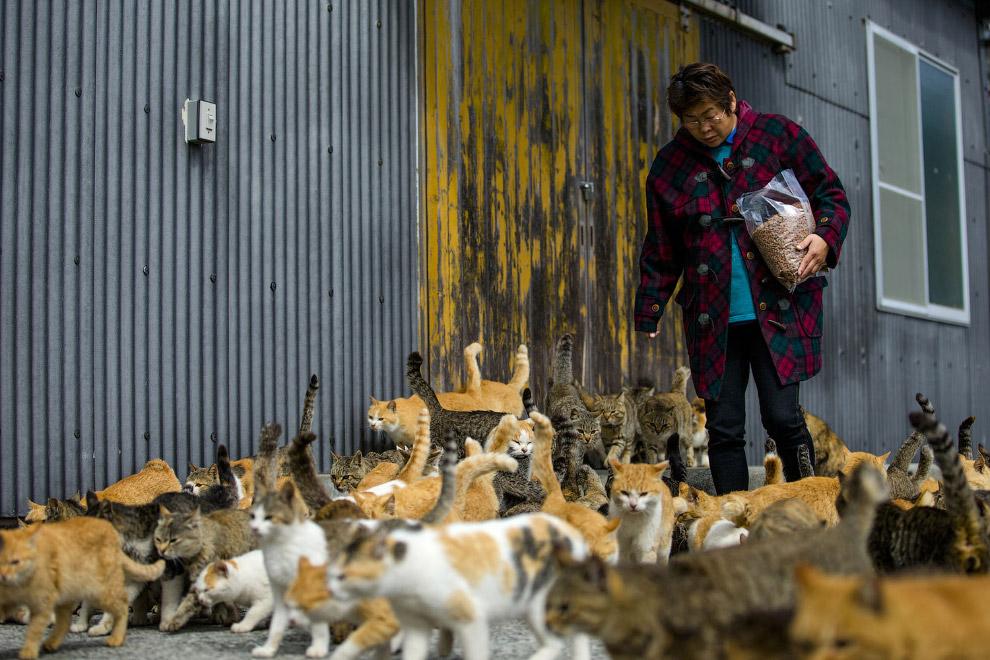 12. Коты вне себя от нетерпения. (Фото Thomas Peter | Reuters):