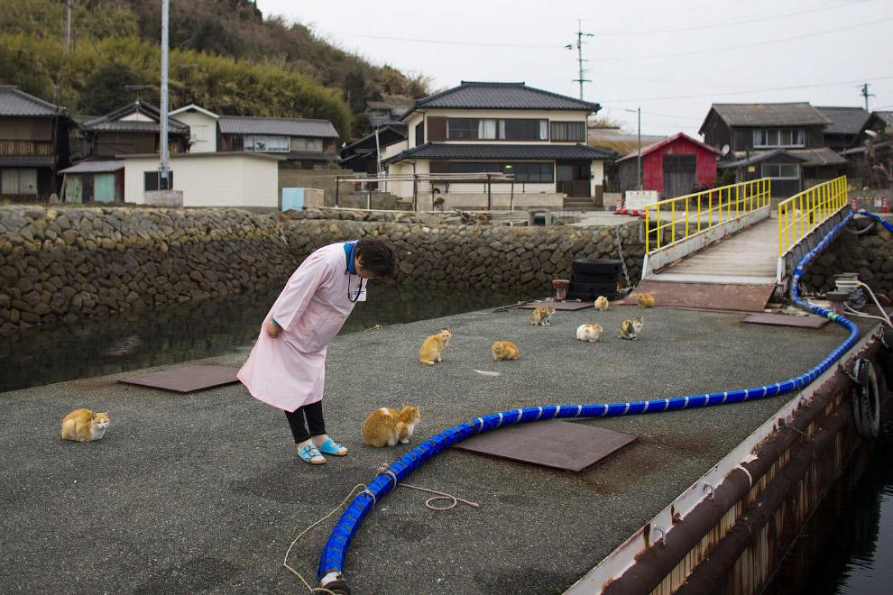 24. Остров кошек Аошима, 25 февраля 2015. (Фото Thomas Peter | Reuters):