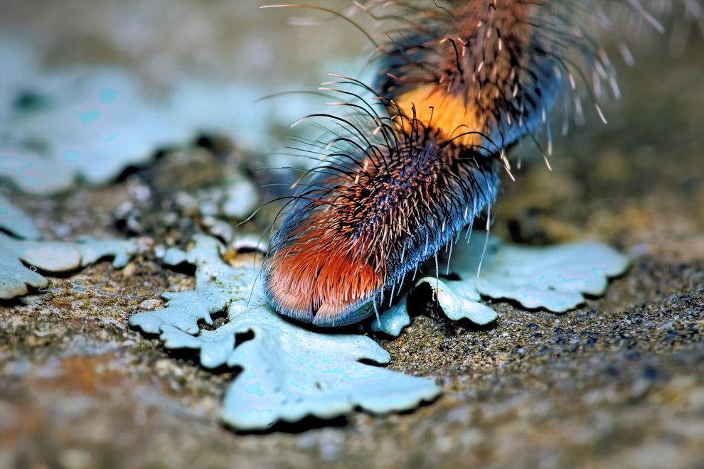 8. В большинстве своём пауки являются ночными животными. Часть пауков строит гнёзда, убежища и норы,