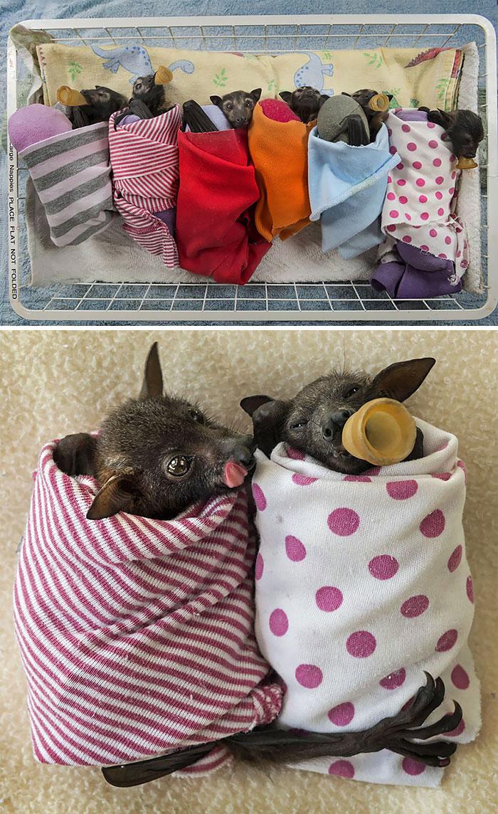 Если Вы думаете, что летучие мыши — ужасные существа, то посмотрите на эти милые фото (51 фото)