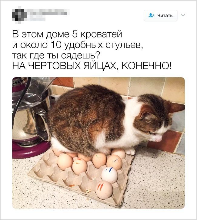 © leetabix/twitter      7.