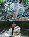 funny-photoshop-battle-winners-39-5a58ce9ab9f58__700.jpg