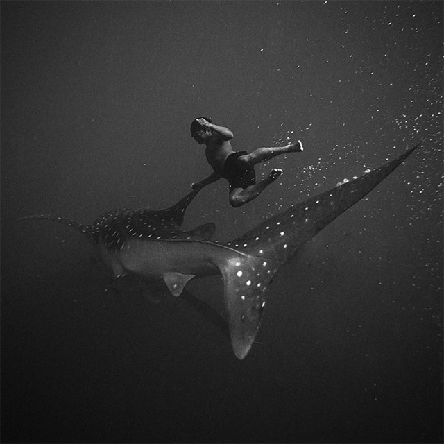 Black and White Underwater Photography by Hengki Koentjoro (8 pics)