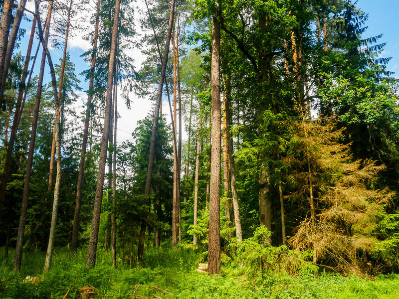 красивого смешанного леса