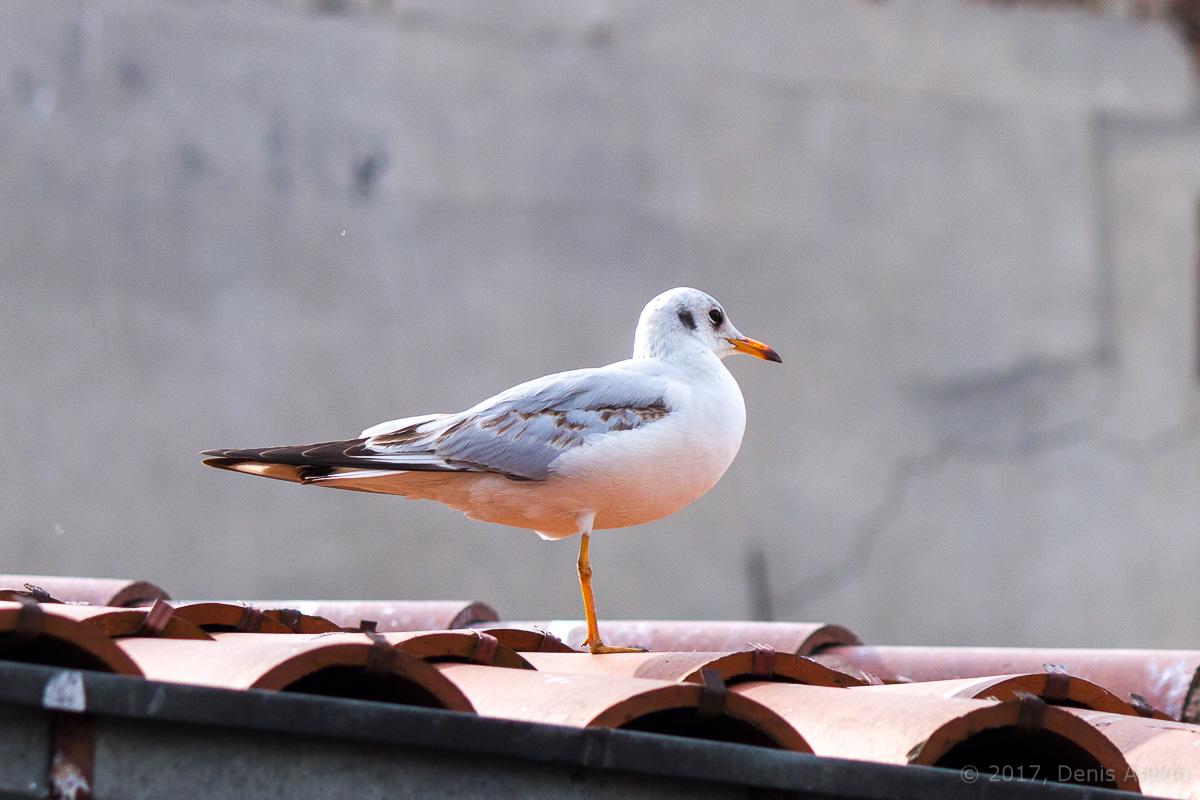 чайки стамбул фото 1