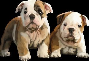 собаки бойцовские
