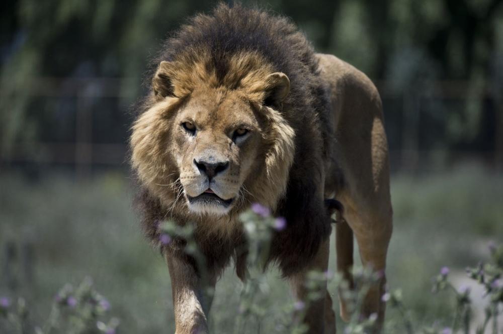 Вэтом зоопарке все наоборот: люди— вклетке, животные— насвободе (7 фото)