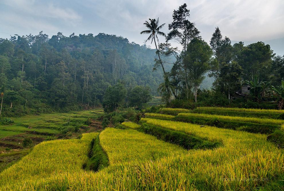 3. Чем дальше от берега и выше в горы, тем условия для земледелия сложнее. Но местные — народ