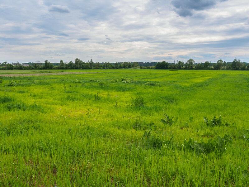 Комаровичский пейзаж.