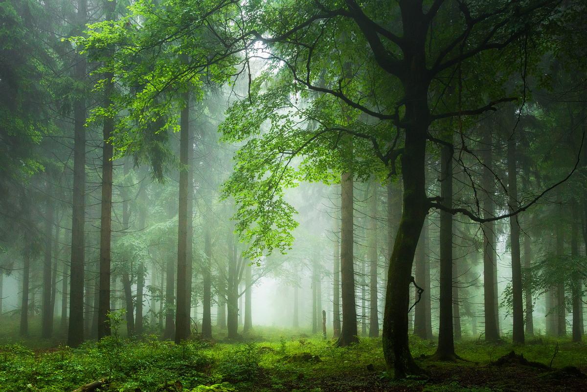 Лес на снимках Хейко Герлихера