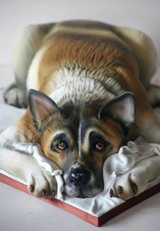 0 17f7fe ba504252 XL - Торты в виде домашних животных