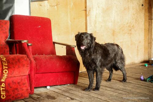Милли собака в добрые руки в москве фото