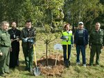 16 сентября в г. Егорьевске прошла экологическая акция Наш лес. Посади своё дерево. Посадки были проведены в городе и вблизи деревни Холмы.