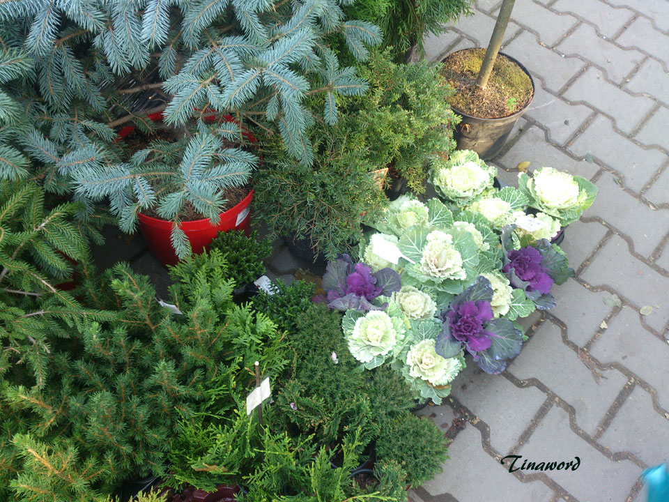 феерия-цветов-8.jpg
