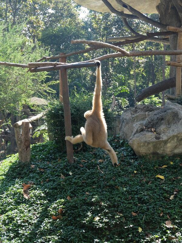 Чиангмай - Зоопарк - Обезьяна