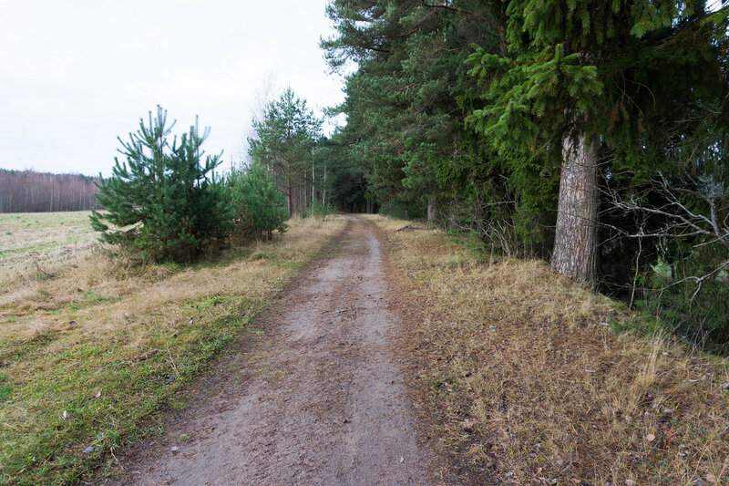 дорога вдоль реки Оредеж рядом с Белгорка и Сиверский