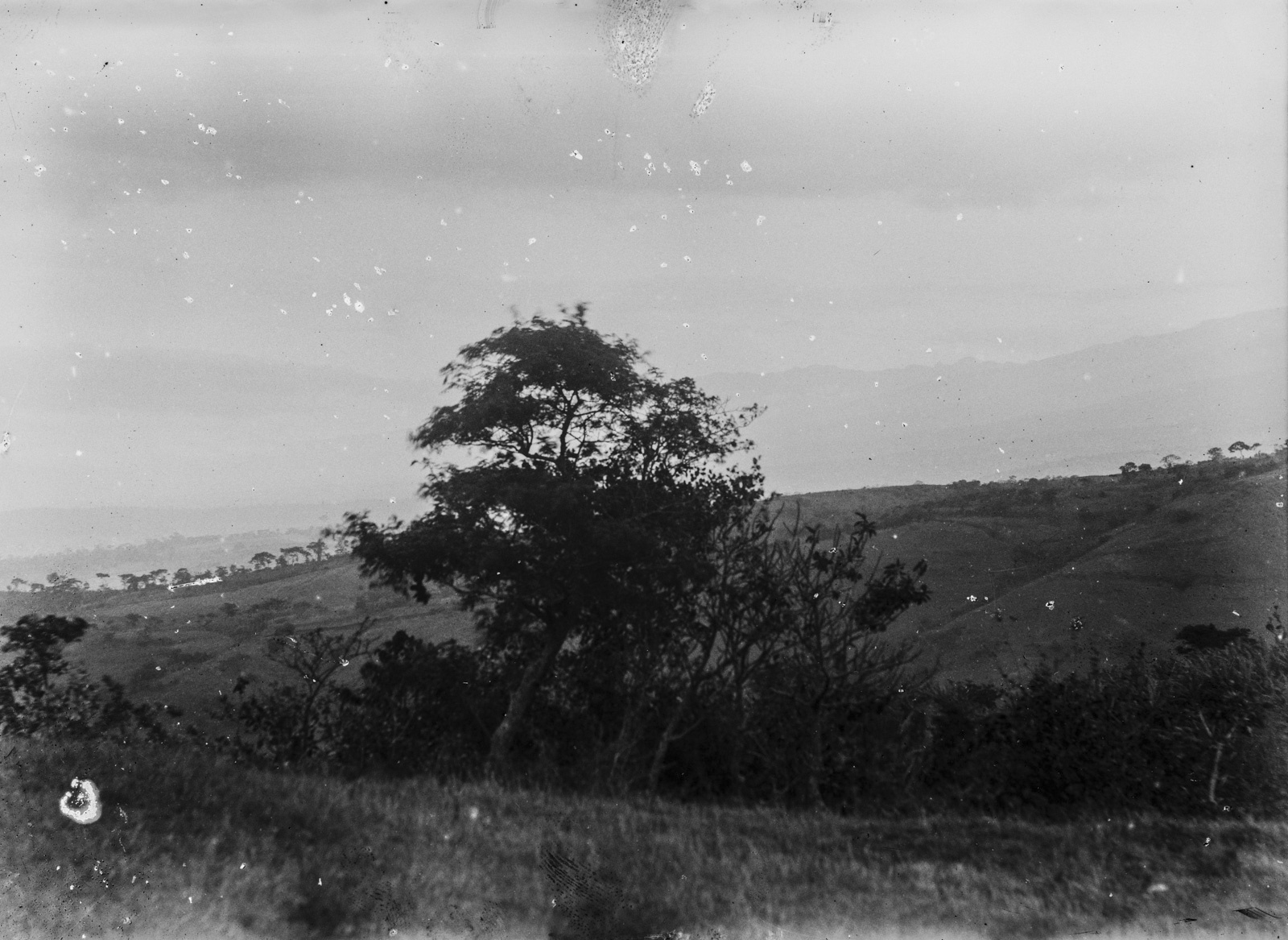 91.  Вид местности на высоте  1300 метров в районе Килиманджаро