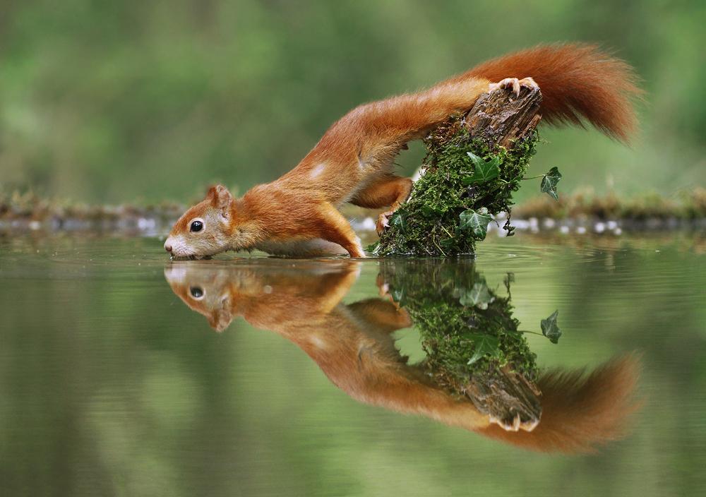 Замечательные фотографии животных Юлиана Рада