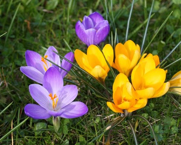 Картинка С первым днем весны! Цветы