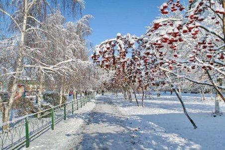 Картинка С первым днем весны! ягоды под снегом