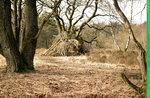 forest_stock_2_by_sarahfuenke-db7a068.jpg