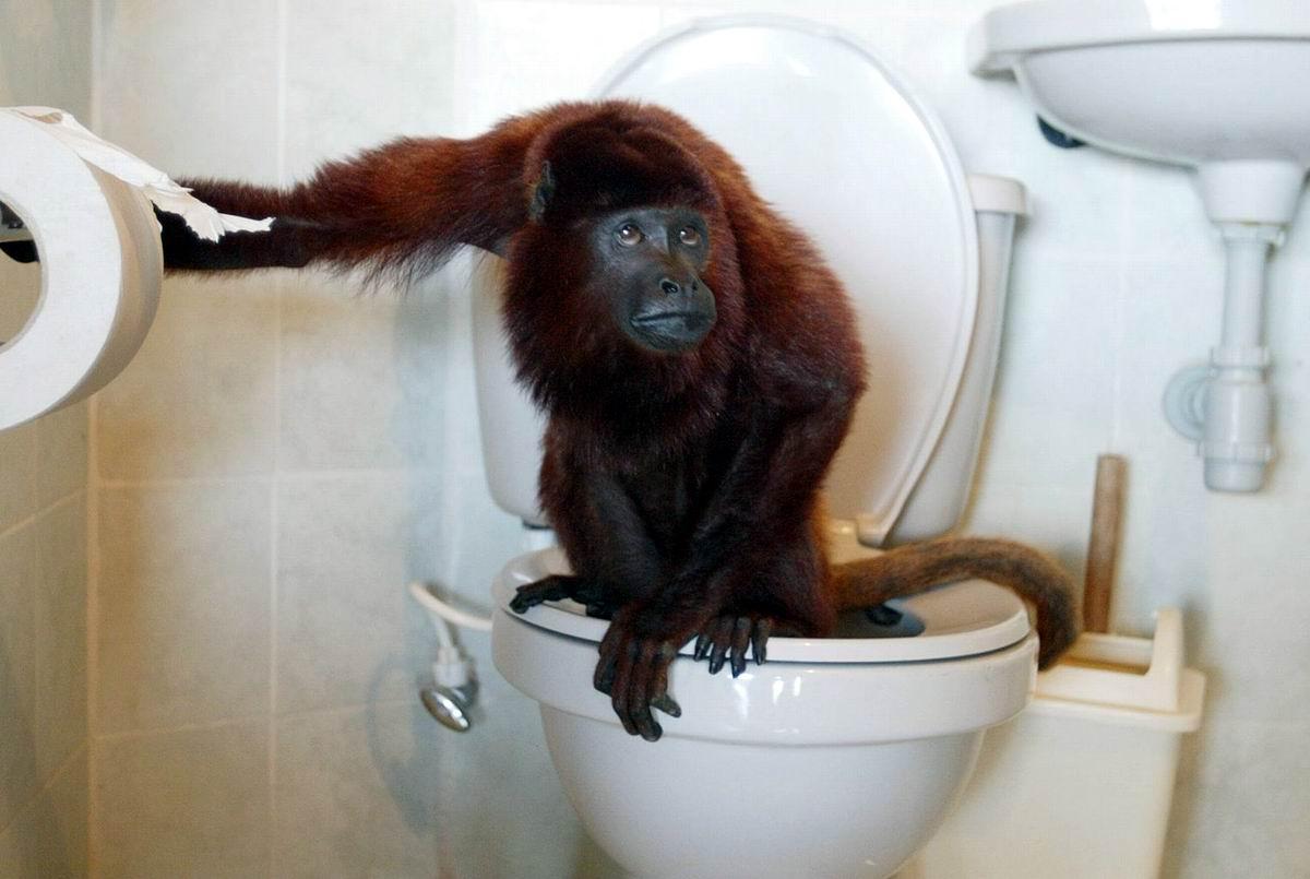 А я сижу на унитазе: Ну очень цивилизованная обезьянка