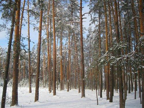 После февральского снегопада