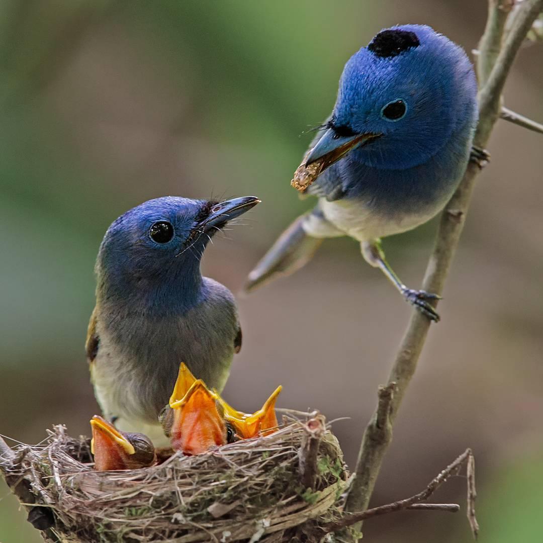Удивительные птицы на снимках Джонсона Чуа