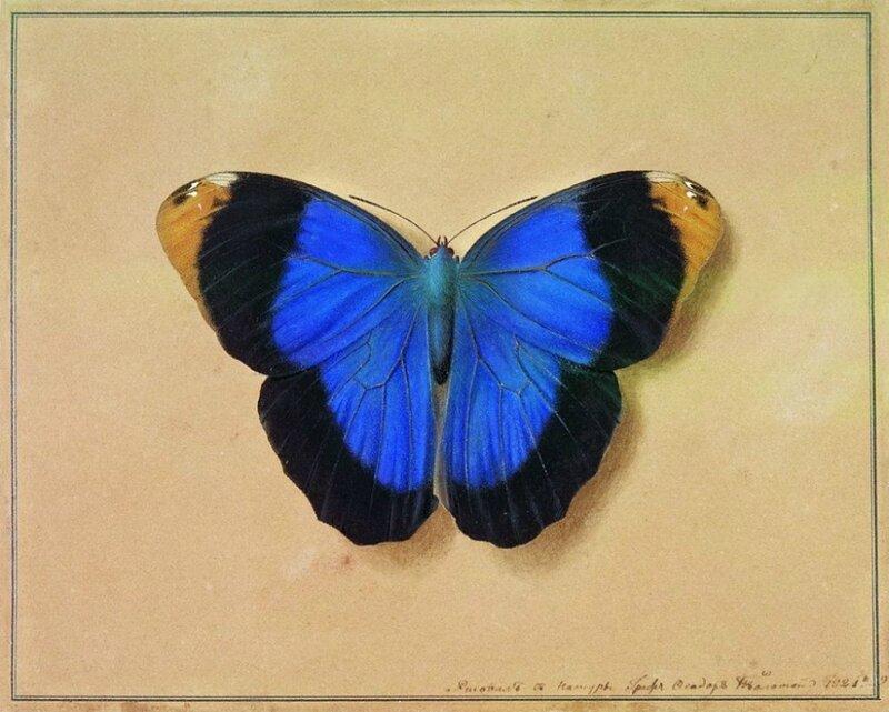 Бабочки в живописи