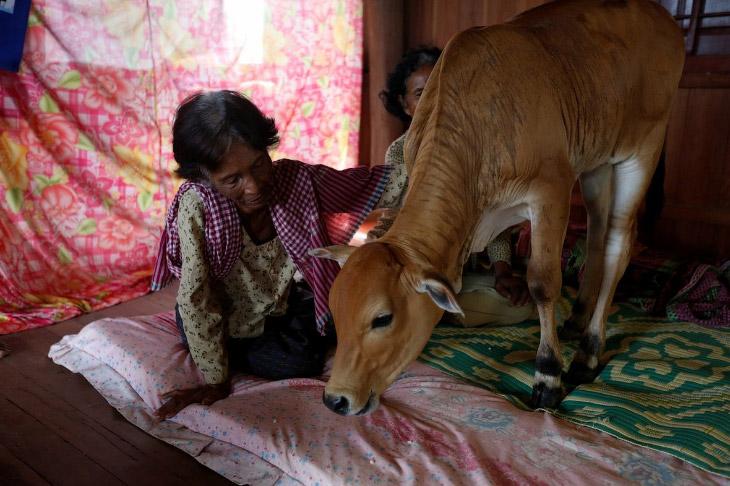 Реинкарнация в Камбодже (8 фото)
