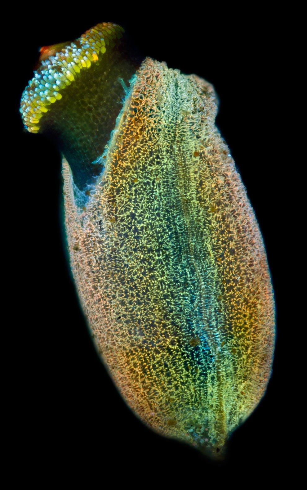 Поощрительная премия.  Клетки L-1210 мыши . 400-кратное увеличение. (Фото Fran